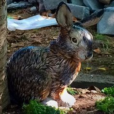 This is a terra cotta bunny that had broken ears and was not painted....so I fixed his ears and downloaded pics of bunnies and painted him...he looks cool!