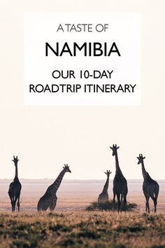 A Taste of Namibia: Our 10-day Roadtrip Itinerary   Self-Drive Namibia