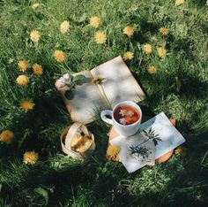 Spring afternoon in the field  Via: @equinoxl (on Instagram)  #spring #tea #nature #field #yellowflowers #book