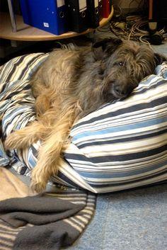 Lotta hat ihr Schmusekissen in Form gebracht. #Verlag #Buch #dog #Hund #relaxen #Kissen #Hundekissen #Hundekorb #entspannt
