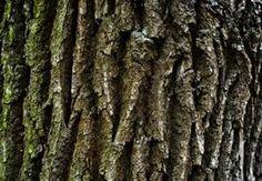 Это кора дуба