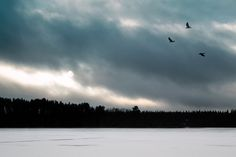 Crows over a lake - This photo is published under Creative Commons Attribution-NonCommercial license. Base Image, Crows, Landscape Photographers, Finland, Landscapes, Creative, Nature, Travel, Ravens