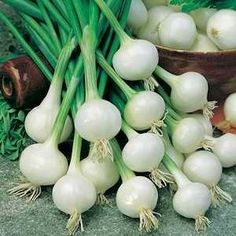 Onion - Cocktail Barletta     Allium cepa    A small white cippola style onion about 2cm in diameter.    Very early and great variety of serving suggestions: in salads on skewers in pickles or as a spring vegetable.