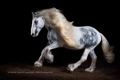 Wiebke Haas | animal photography » Eine haarige Angelegenheit