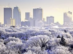 Winnipeg, Manitoba Canada - Winter day with hoar frost on the trees. Moving To Canada, Canada Travel, National Geographic Travel, Western Canada, Winter Photos, Le Far West, City Photo, Beautiful Places, Beautiful Gorgeous