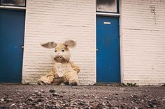 #begging #costume #cuddly toy #disguised #easter bunny #hare #poor #rabbit #sad #soft toy