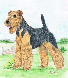 welsh terrier: painted