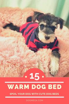 Soothing bed for dogs - Dog Tips & Tricks - Soothing bed for dogs Check out our faux fur dog bed selection for the very best in unique or custom, handmade pieces from our pet supplies shops. Cute Dog Beds, Pet Beds, Cute Dogs, Unique Animals, Animals And Pets, Miniature Dog Breeds, Unique Dog Breeds, Loyal Dogs, Young Animal