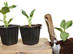 Top 10 vegetables to grow in your garden