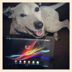 Dreyfus is excited to play with Xperia Tablet Z