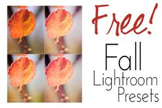 Free Lightroom Presets for Autumn - Fall Editing! | Find it FREE Photography