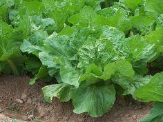 Fertilization of your organic vegetables is important Liquid Detox, Organic Vegetables, Healthy Smoothies, Fertility, Healthy Living, Green, Farming, Sunshine, Vegan