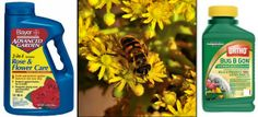 How to Stop Bee-Killing Pesticides? Start with the Box Stores!