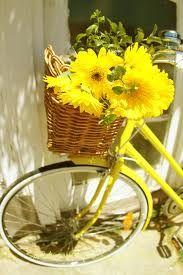 Bike with Gerber Daisy - Big Sunshine yellow color