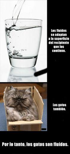 Los gatos son fluidos :v