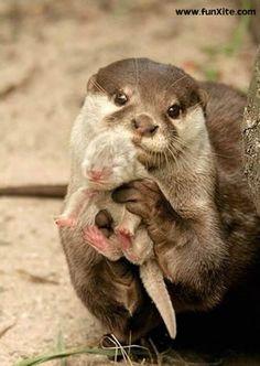 newborn animals pictures - Google Search