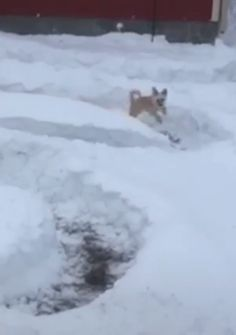 Snow Zoomies What a great owner to do this for his dog. Snow Zoomies What a great owner to do this for his dog. Funny Animal Videos, Cute Funny Animals, Funny Animal Pictures, Animal Memes, Cute Baby Animals, Funny Cute, Funny Dogs, Animals And Pets, Funny Humor