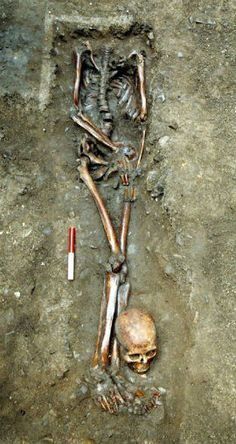 YORK, ENGLAND—Seven skeletons were selected from the more than 80 unearthed at a Roman-era cemetery in Driffield Terrace for whole genome analysis. All of the men buried in the cemetery had been under the age of 45 at the time of death, and are thought to have been gladiators, soldiers, or criminals.f