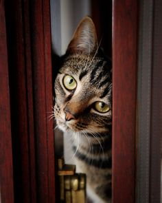 shows personality, color of door frame, soft lighting Paws Pet Photography Book by Paul Walker