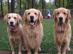 Larry, Moe, and Curly  aka Wyatt, Gunther and Caleb