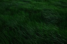 Explore nature images on We Heart It Nature Images, Nature Pictures, Zero Hour, Cain And Abel, Slytherin Aesthetic, Green Theme, Nature Aesthetic, It Gets Better, Green Grass
