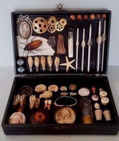 Boîte souvenirs d'une jeune naturaliste Cabinet de curiosités ambulant Oddities