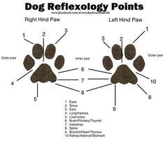 La riflessologia è una tecnica molto efficace di guarigione. Ecco una breve guida su come ridurre le infiammazioni e promuovere il flusso di sangue del tuo cane grazie alla riflessologia.