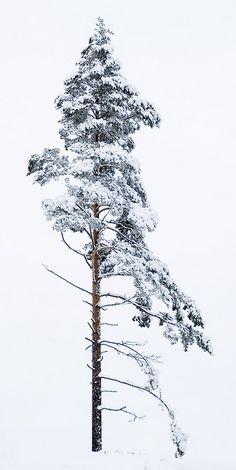 Just a tree by Dustlake, via Flickr