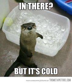 A Ollie lo único que le preocupa es el frío y no que su móvil se moje ya que cuenta con la protección #OtterBox