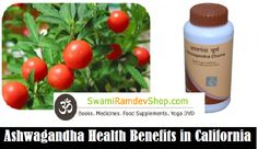 #Ashwagandha is otherwise called #winter #cherry. The primary #ashwagandha #benefits incorporate feeding the blood, expanding muscle tissue, expanding semen tally in men, and sustaining of the nerve tissues in ladies. It is known as a rasayana in the social insurance investigation of ayurveda.