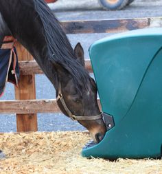 Using our Harmony Hay Feeder on a woodchip paddock to keep hay dry, clean - and still allow the horse to eat naturally at ground level Hay Feeder For Horses, Horse Feeder, Dream Barn, Barn Plans, Horse Barns, How To Level Ground, Eat, Horse Stuff, Equestrian