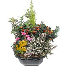 Les fleurs deuil Coupe de plantes Quiétude