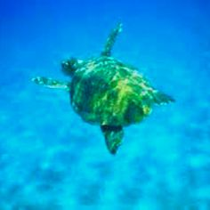 Zante, Greece - Turtle spotting!