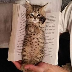 Bookworm❤❤ By unknown Tag your friends    Follow us  #animallove.co