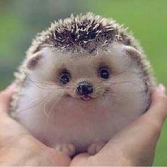 So cute!!!!:)