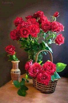 Rose Indonesia