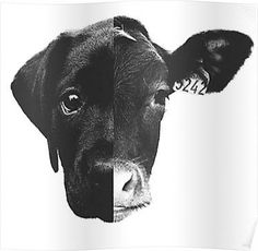 Erase the dividing line of care and concern. Go vegan today. Mercy For Animals, Animals And Pets, Cute Animals, Amor Animal, Mundo Animal, Vegan Tattoo, Vegan Quotes, Vegetarian Quotes, Vegan Vegetarian