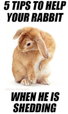 5 Tips to Help Your Rabbit When He Is Shedding More