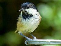Ptáci na krmítku III., čtyři méně známé druhy sýkorek Bird, Animals, Animales, Animaux, Birds, Animal, Birdwatching, Animais