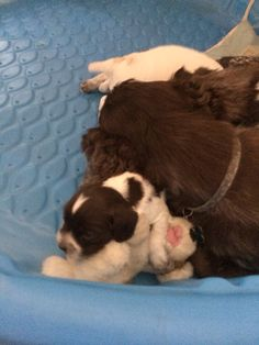 Day 17:  Ralphie is sleeping on Mama's toy; Mama is resting her head on Ralphie. Snugglers!