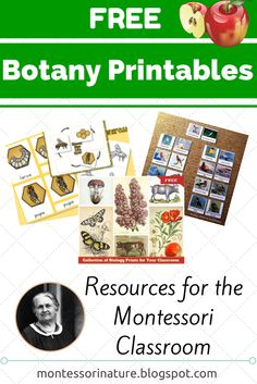 Free Montessori Botany Printables via Montessori Nature