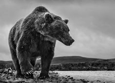 David Yarrow Photography More Animals here.
