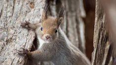 Gyűjtemények - Google+ Happy Life, Animals, Google, Collections, The Happy Life, Animales, Animaux, Animal, Animais