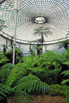 //Kibble Palace at Glasgow Botanical Gardens. This Kibble Crystal Art Palace was dismantled and moved from Coulport on the shores of Loch Long by barge to Glasgow where it was reconstructed in the Botanical Gardens. It opened in 1873 and its interior. Kew Gardens, Botanical Gardens, Glasgow Botanic Gardens, Glass House, Architecture, Horticulture, Botany, Garden Plants, Garden Landscaping