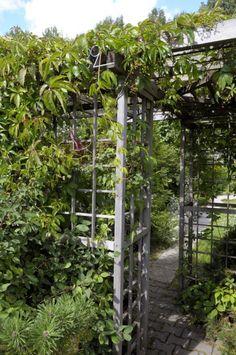 Kukat, yrtit ja kärhöt kasvavat sopusoinnussa | Viherpiha