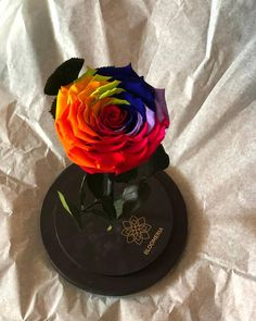 Colors! ❤💛💚🧡💙💜 #bloomeria #welcometotheworldofflowers Preserved Roses, Preserves, Colors, Cake, Desserts, Instagram, Food, Pie Cake, Tailgate Desserts