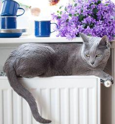BrightNest | 7 Suprising Pet Dangers in Your House