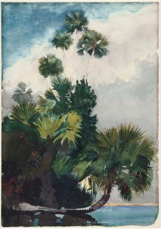 Winslow Homer, Palm Trees, Florida 1904 - Watercolor over graphite. via: MFA Boston / DesimoneWayland