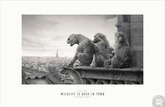 Risultati immagini per cannes lions2012 print