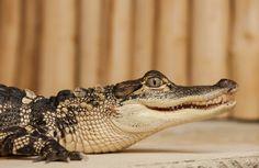 Krokodýlí Zoo Praha http://www.krokodylipraha.cz
